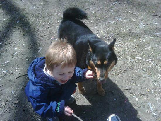 Leslieville Dog Park